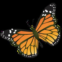"""Résultat de recherche d'images pour """"papillon insecte"""""""